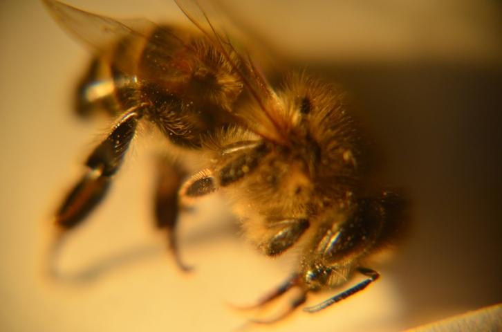 Bee001