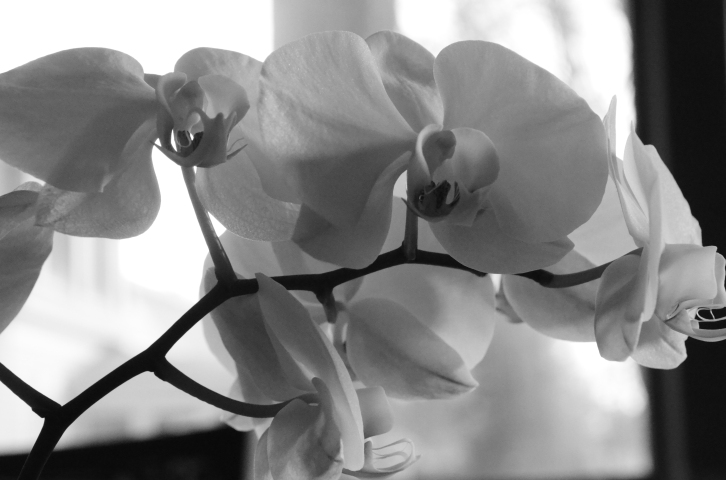 Cultivating orchids is an art.