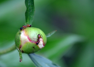 Ants01
