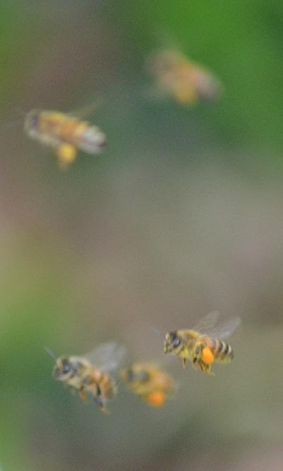 Lots of pollen!
