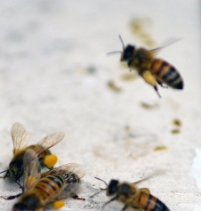Bee03