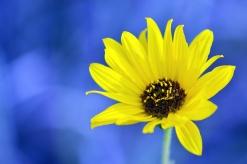 FlowerYellow02
